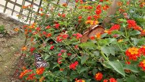 Uma borboleta bonita na folha doce, foto de stock royalty free