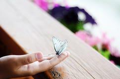 Uma borboleta branca senta-se em uma mão do ` s da criança em um fundo da madeira e das flores imagens de stock