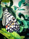 Uma borboleta brilhantemente colorida maravilhosa Fotografia de Stock Royalty Free