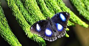 Uma borboleta colorida Fotos de Stock Royalty Free