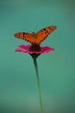Uma borboleta delicada sobre uma flor Fotografia de Stock Royalty Free