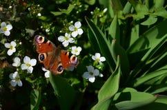 Uma borboleta está em uma flor Imagem de Stock Royalty Free