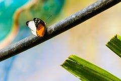 Uma borboleta que descansa em uma filial Imagem de Stock
