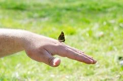 Uma borboleta senta-se na mão de um homem ou de um homem adulto em um fundo da natureza verde fotos de stock royalty free