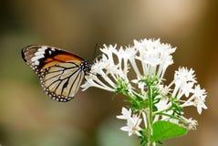 Uma borboleta, sentando-se em uma flor fotografia de stock royalty free