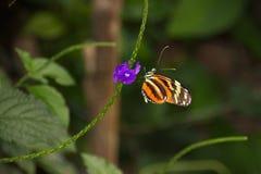 Uma borboleta surpreendida Fotos de Stock Royalty Free