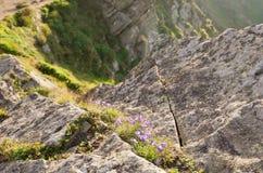 Uma borda rochosa coberta com as plantas Imagens de Stock