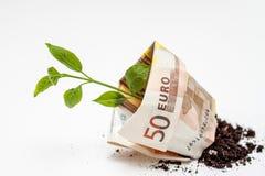Uma cédula de um dinheiro de 50 euro de que um broto verde cresce Fotografia de Stock Royalty Free