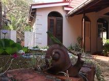 Uma caça do lagarto verde ao lado de uma lagoa de peixes nos trópicos vídeos de arquivo