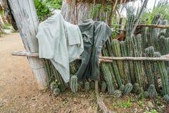 Uma cabana velha do escravo - cerca do cacto com lavagem nele imagem de stock royalty free
