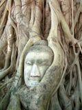 Uma cabeça de pedra da Buda entrelaçou-se dentro das raizes da árvore imagem de stock royalty free
