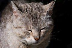 Uma cabeça de um gato Fotos de Stock
