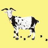 Uma cabra Imagens de Stock