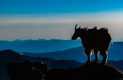 Uma cabra de montanha que olha sobre seu domínio fotografia de stock