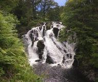 Uma cachoeira de pressa em uma floresta verde Fotografia de Stock Royalty Free