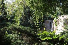 Uma cachoeira pequena entre as árvores Fotografia de Stock