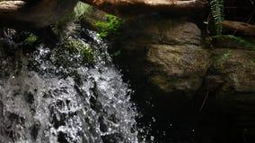 Uma cachoeira profundamente na selva ao longo de uma água vomitando do córrego vídeos de arquivo