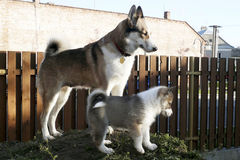 Uma cadela e seu cachorrinho fotografia de stock