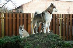 Uma cadela e seu cachorrinho imagens de stock