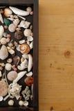 Uma caixa com shell Imagem de Stock Royalty Free