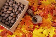 Uma caixa das nozes-pecã, biscoito de madeira antigo da porca imagem de stock royalty free