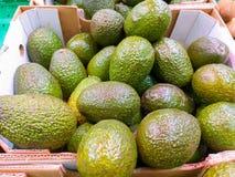 uma caixa do cartão na abundância do mercado de abacates verdes brilhantes saborosos apenas colheu pronto para ser vendido aos cl imagem de stock royalty free