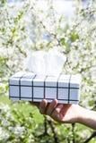 Uma caixa dos guardanapo allergy imagens de stock royalty free