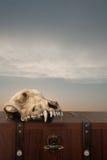 Uma caixa místico com crânio fotografia de stock royalty free