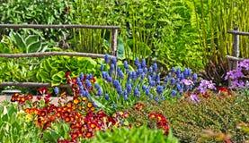 Uma cama de flor das prímulas Imagem de Stock