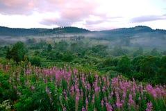 Uma cama de flor natural magnífica entre o prado selvagem Fotos de Stock
