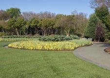 Uma cama de pansies amarelos, Dallas Arboretum Fotos de Stock