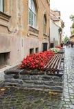 Uma cama do banco e de flor com flores em um dia chuvoso na cidade de Sibiu em Romênia Fotografia de Stock
