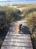 Uma caminhada à praia Fotografia de Stock