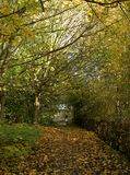 Uma caminhada através das madeiras Imagens de Stock Royalty Free