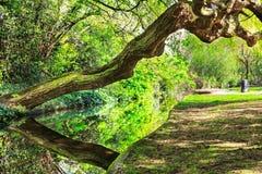 Uma caminhada chorando de Willow Leaning Over New River, Londres Imagens de Stock Royalty Free