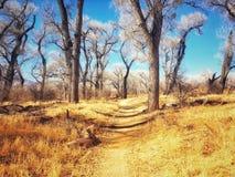 Uma caminhada da tarde entre as árvores Foto de Stock Royalty Free