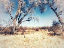 Uma caminhada da tarde entre as árvores Fotos de Stock Royalty Free