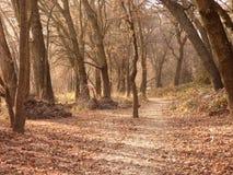 Uma caminhada do amanhecer fotografia de stock royalty free