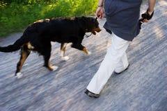 Uma caminhada do cão Fotografia de Stock Royalty Free
