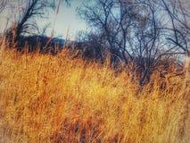 Uma caminhada entre as ervas daninhas Imagem de Stock