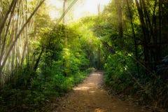 Uma caminhada na floresta úmida foto de stock