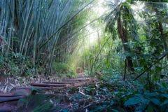 Uma caminhada na floresta úmida fotografia de stock royalty free