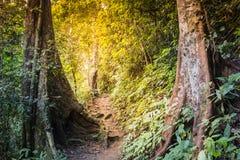 Uma caminhada na floresta úmida imagens de stock
