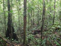 Uma caminhada na floresta de amazon imagens de stock