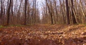 Uma caminhada na floresta decíduo do outono vídeos de arquivo