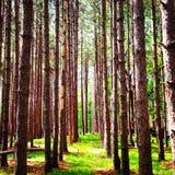 Uma caminhada na madeira Fotos de Stock