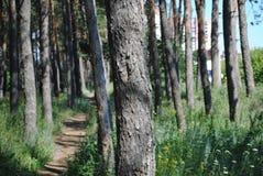 Uma caminhada nas madeiras Foto de Stock Royalty Free