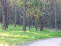 Uma caminhada nas madeiras Fotos de Stock