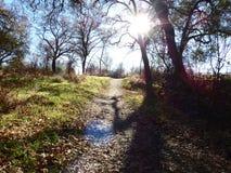 Uma caminhada nas madeiras Imagens de Stock Royalty Free