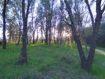 Uma caminhada nas madeiras Imagem de Stock
